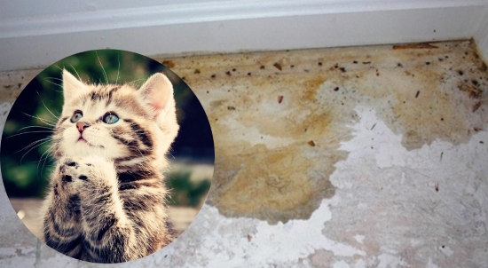Cat And Dog Urine Smell From Concrete